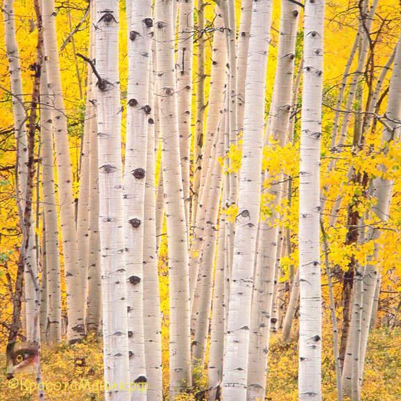 Мастер пейзажной съемки Christopher Burkett