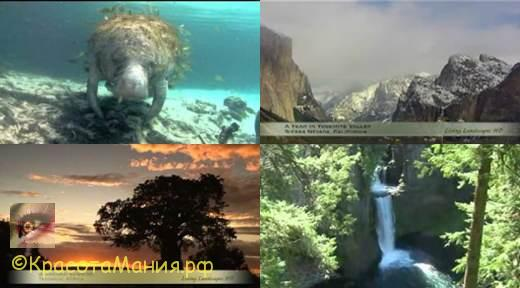 Красивое видео под музыку Шри Чинмоя