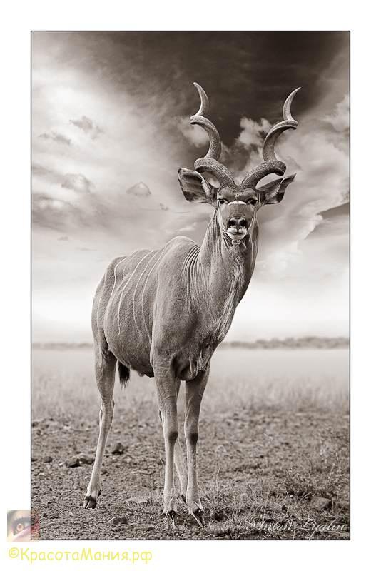 Портрет Африки.Антон Лялин