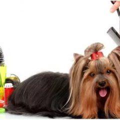 Какие товары нужны для груминга собак?