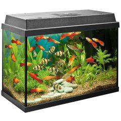 Какие животные могут жить в аквариуме?